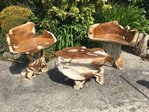 Teak Root Table & Two Chairs A